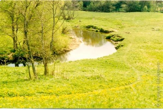 Сосны на обрыве.Весна. фото 14