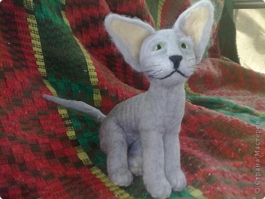 это котенок канадского сфинкса фото 1