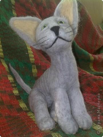 это котенок канадского сфинкса фото 2