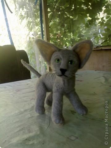 это котенок канадского сфинкса фото 3