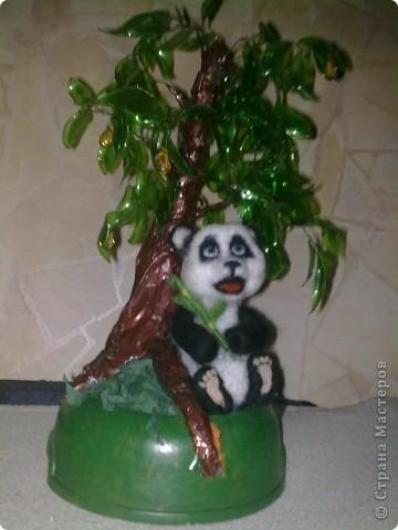жила была панда Маруся  фото 6