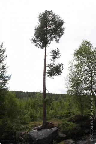 Ну виды в Норвегии везде просто великолепные! фото 13