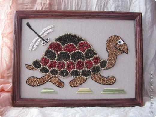 Черепаха и стрекозка фото 1