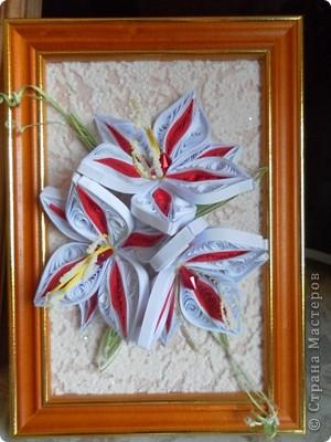 Красно-белые лилии фото 1