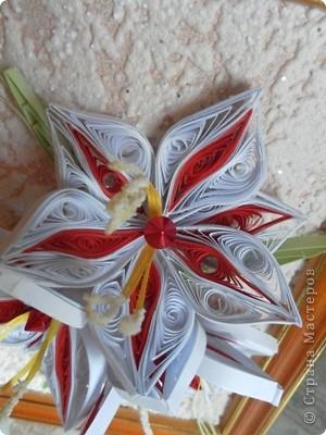 Красно-белые лилии фото 2