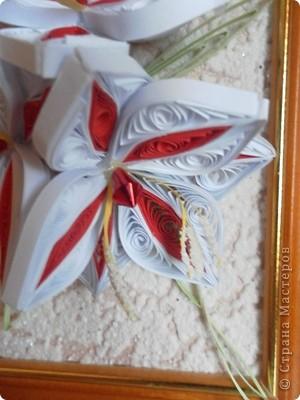 Красно-белые лилии фото 4