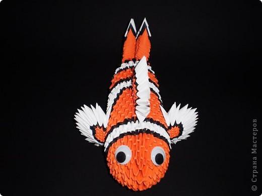 Рыбка - клоун фото 2