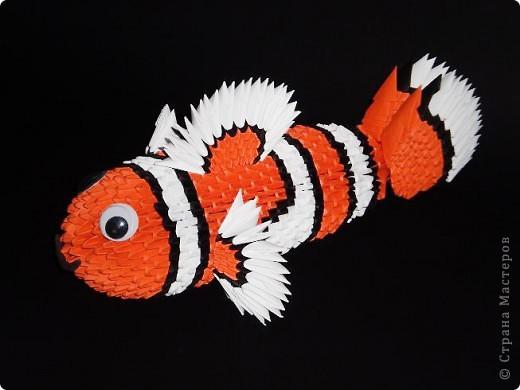 Рыбка - клоун фото 4