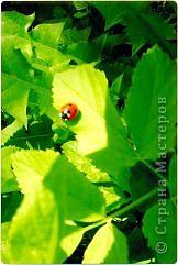 Бабочка красавица. фото 3