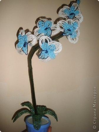 орхидея фото 1