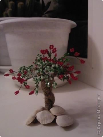 вырастила еще одно маленькое деревце!!! фото 1