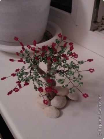 вырастила еще одно маленькое деревце!!! фото 2