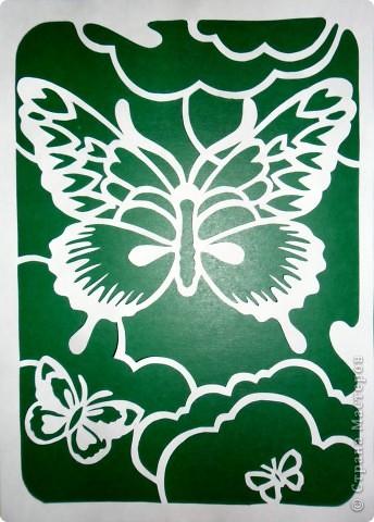 Бабочки. фото 1