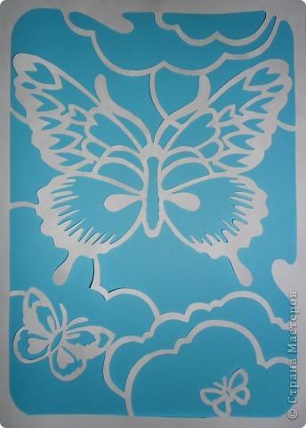 Бабочки. фото 3