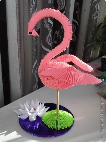 Еще фламинго. фото 1
