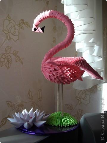 Еще фламинго. фото 2