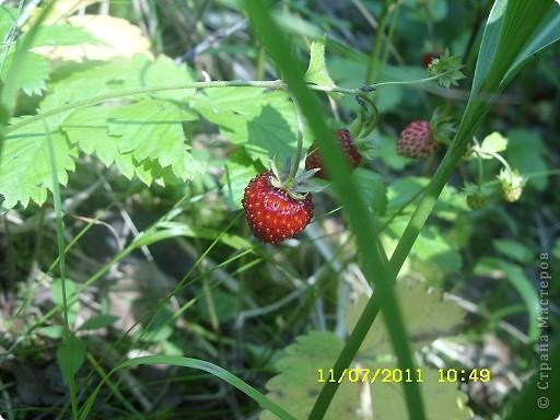 Ну и что что у нас кругом болота-зато ягод всяких....это морошка фото 8