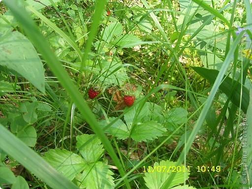 Ну и что что у нас кругом болота-зато ягод всяких....это морошка фото 9