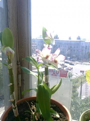 Расцвел новый цветочек! фото 1