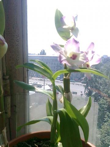 Расцвел новый цветочек! фото 2