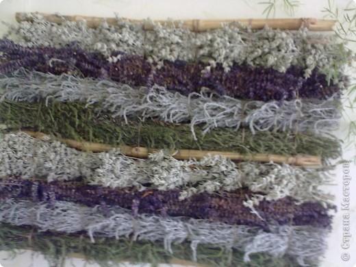 Коллаж из степных трав фото 2