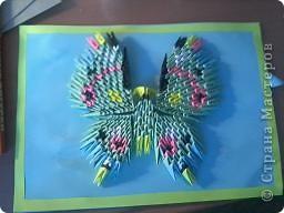 Бабочка :) фото 5