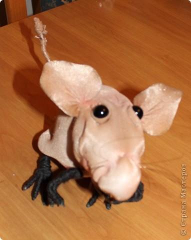 Мои новыи мыш! фото 3