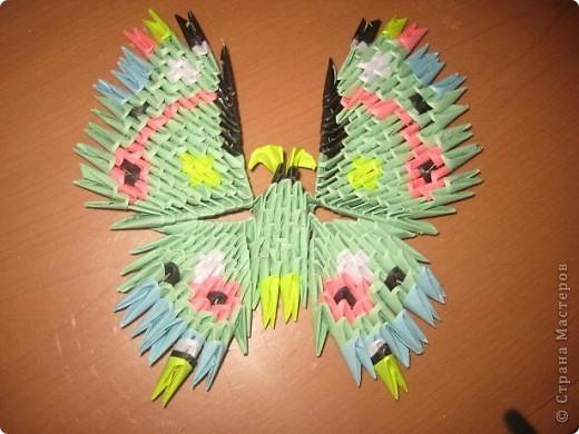 Бабочка :) фото 1