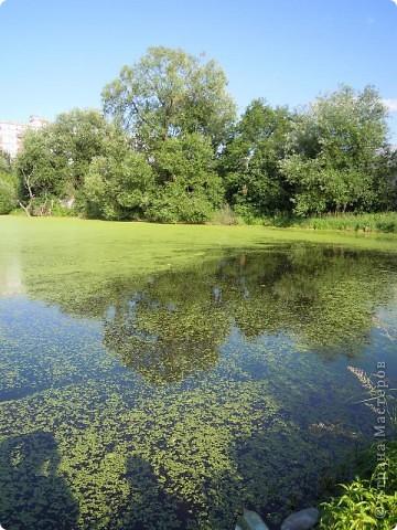 Блики солнца отражаются в пруду. фото 2