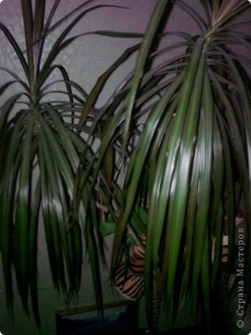 Мои комнатные цветики. фото 6