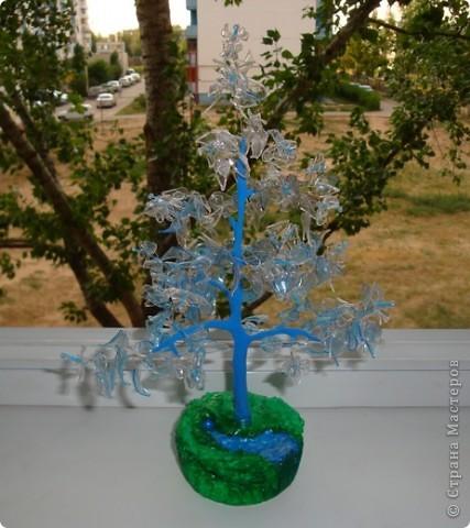 бутылочное дерево. фото 1