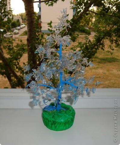 бутылочное дерево. фото 2