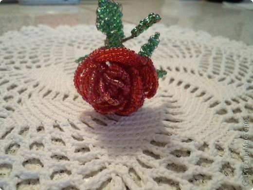 Дорогие жители страны мастеров выставляю первые свои розы. фото 1
