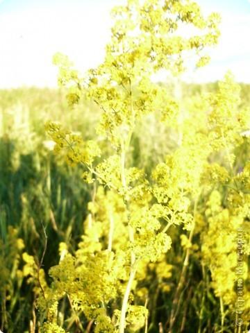 на лужайке фото 8