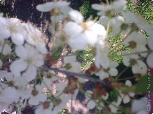 Ирисы цвели весной. фото 2