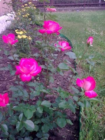 Ирисы цвели весной. фото 7