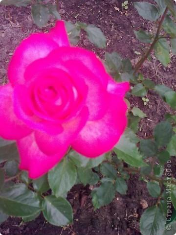Ирисы цвели весной. фото 3