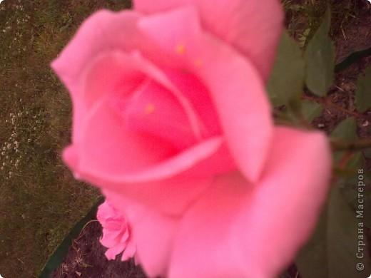 Ирисы цвели весной. фото 5