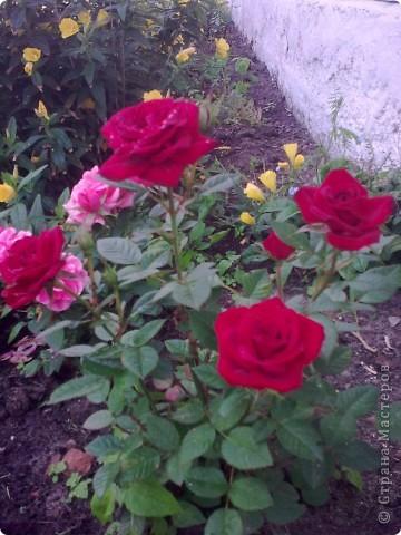Ирисы цвели весной. фото 4
