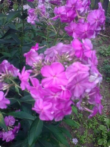Ирисы цвели весной. фото 17