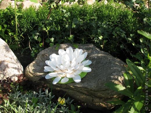 Ирисы цвели весной. фото 20