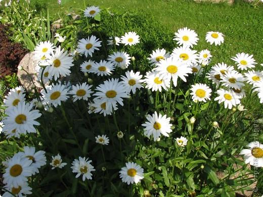 Ирисы цвели весной. фото 11