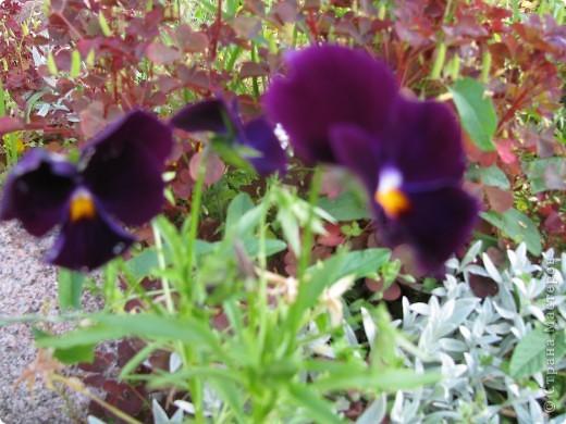 Ирисы цвели весной. фото 14