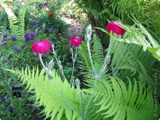 Ирисы цвели весной. фото 19