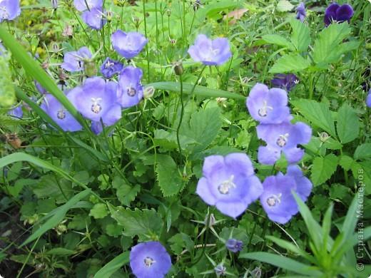 Ирисы цвели весной. фото 8