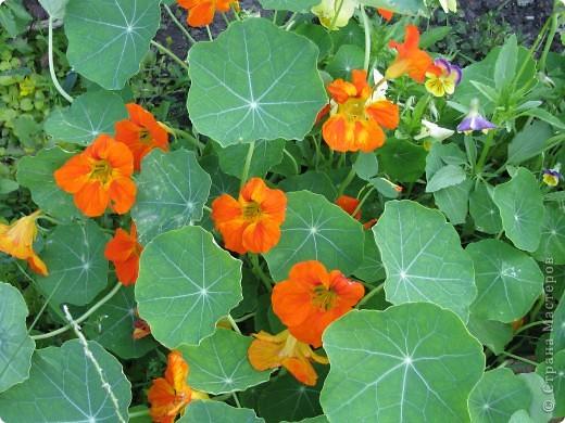 Ирисы цвели весной. фото 13