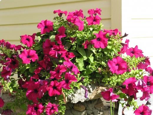 Ирисы цвели весной. фото 18