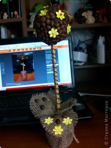 И снова Кофейное дерево.)))
