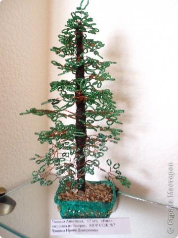 Дерево фото 3