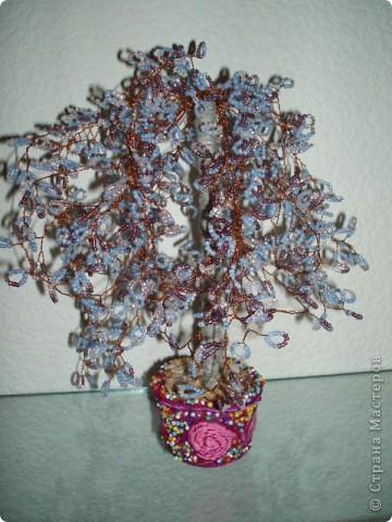 Дерево фото 4